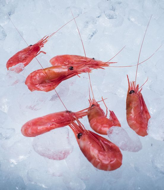 Cold-water prawns - Ocean Prawns